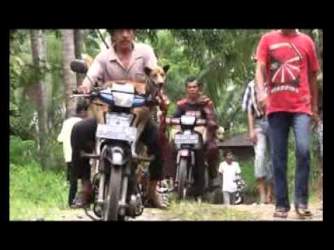 Padang Pariaman Dukung Olah Raga Buru Babi