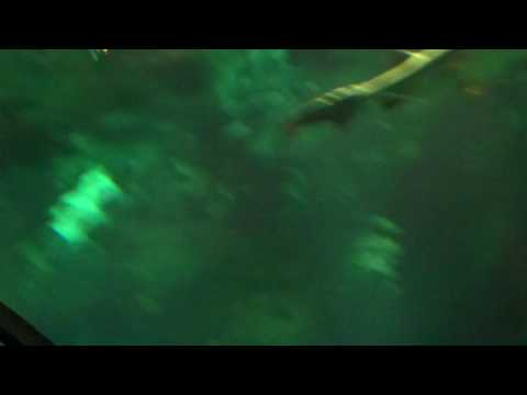 Sharks at Sea World