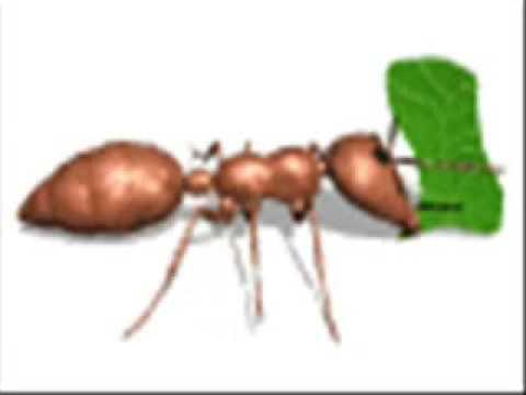 El cuento de la hormiga feliz