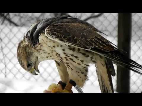The Museum of Nature & Falconry