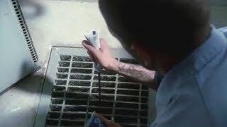 Download Lagu Prison Break - CUTE POISON (scene) Gratis STAFABAND