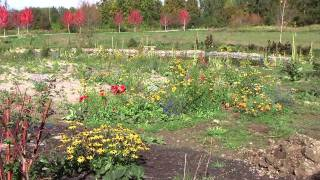 Watch Stephen Gordon Field And Flower video