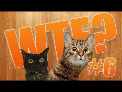 Animality. Видео 6: Кот в шоке - WTF kitty!