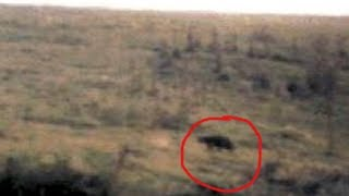 Unexplained Mystery – The beast of Bodmin Moor
