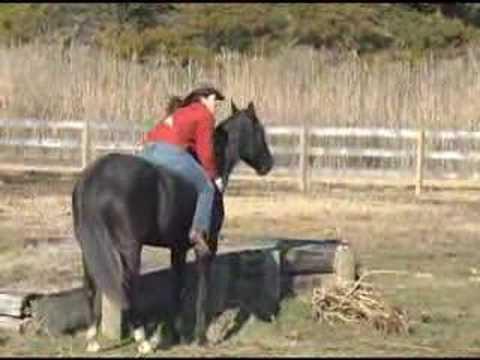Natural Horsemanship Training Videos – DVD Series