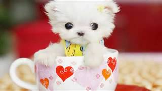 20 Cutest puppies in the world