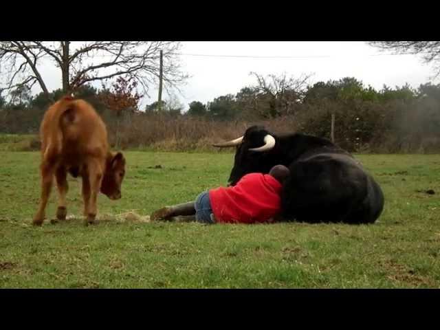 Fadjen et moi 2 (taureau de corrida)