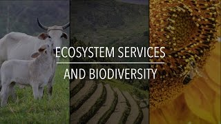 FAO Policy Series: Ecosystem Services and Biodiversity