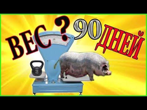 Вьетнамские п0р0сята. Сколько весит п0р0сенок в 90 дней