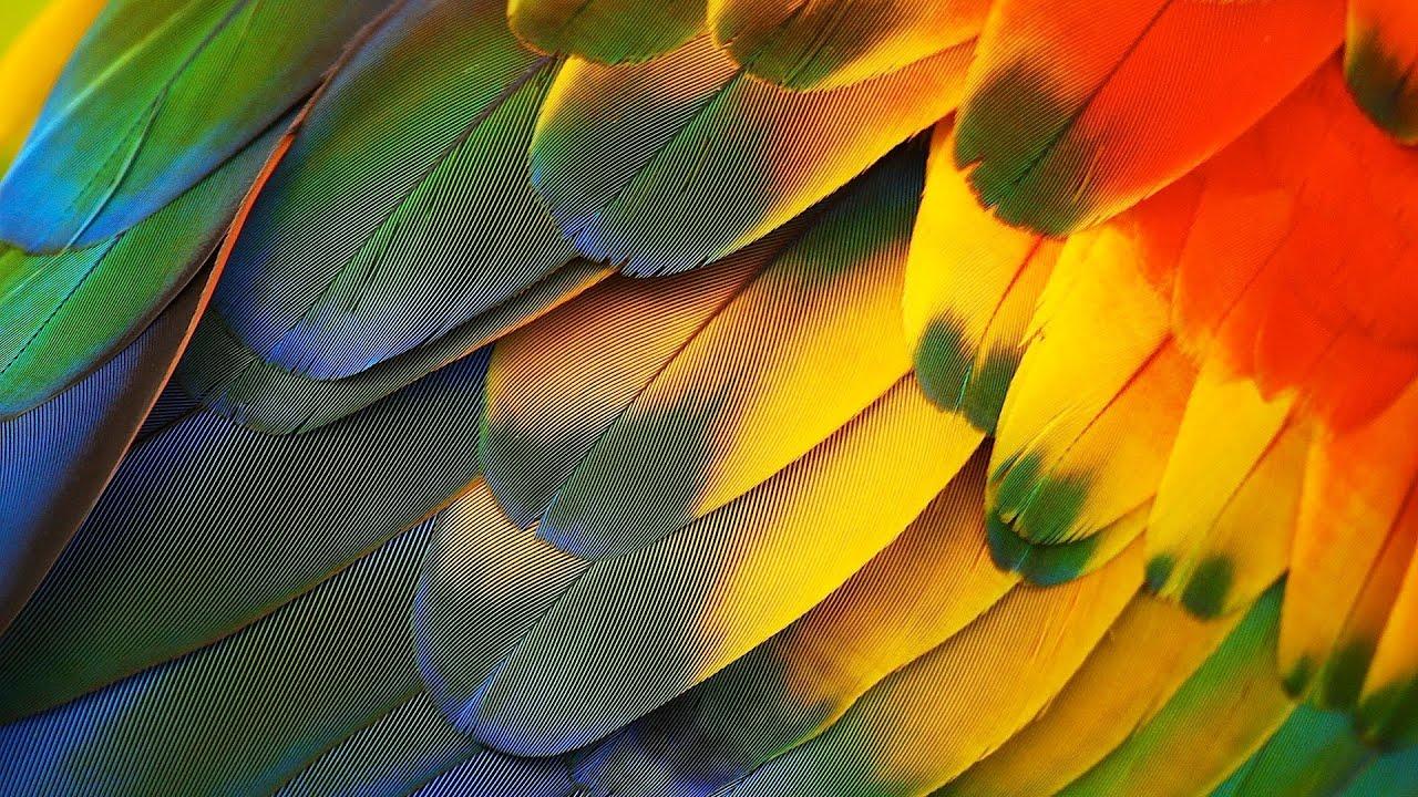 What Colour Paint With Parrot Wallpapper
