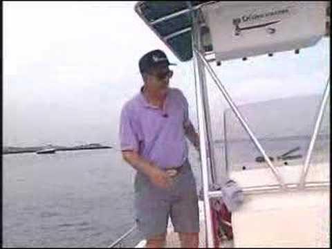 Fluke Fishing LIve Snappers Long Island The Fishing Line