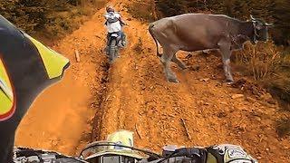 Animals Vs Bikers 2017 - Dogs, Birds, Turtles & Cows Vs Motorcyclists [Ep.#07]