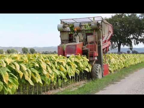Spapperi S.r.l. - Raccoglitrice Tabacco RA 632 / Tobacco Harvester RA 632