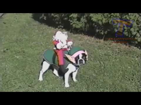 Dogs, the funniest animals in animal world   Funny dogs compilation