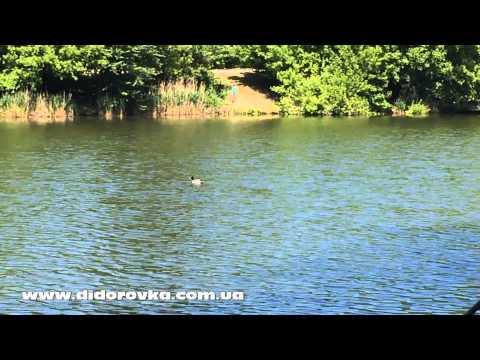 озеро дидоровка рыбалка