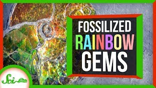 The Rainbow Gem Made from Ancient Sea Creatures