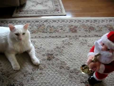 Tom Katt Meets Saxophone Santa video