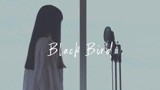 アカペラ Black Bird Aimer Groovy Groove