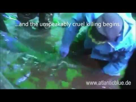 What Happens To Dolphins In Taiji? Honoring The Victims of Slaughter and Captivity [GRAPHIC]