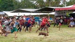 PIG CHASE // TULI PUAKA // TONGA AGRICULTURAL SHOW
