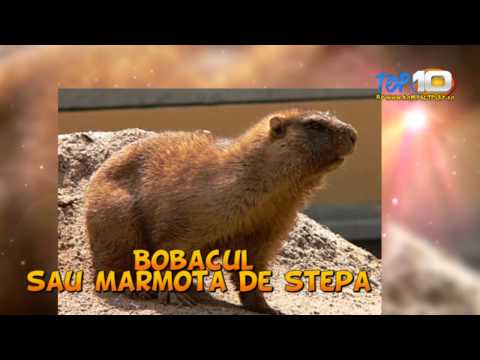 Top 10 Cele Mai Importante Animale Disparute Din Romania video