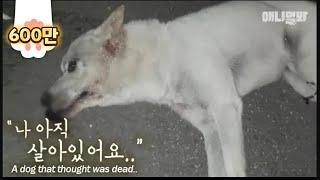 """죽은 줄 알았던 백구가 보낸 마지막 메세지,ㅣThe Dog Says, """"Don't Go.. I'm Still Alive.."""""""