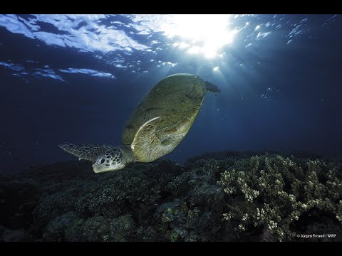 Let Sea Turtles Off the Hook - Earth Hour 2015