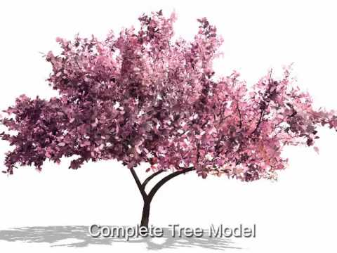 Single Image Tree Modeling
