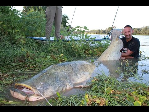CATFISH MONSTER VS SMALL SPINNING ROD — 260 POUNDS X 2, 53 METERS by YURI GRISENDI
