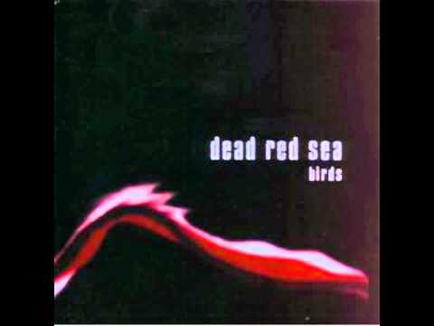 Dead Red Sea - Birds