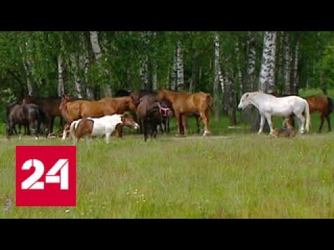 Судьбы лошадей: история человеческой жестокости