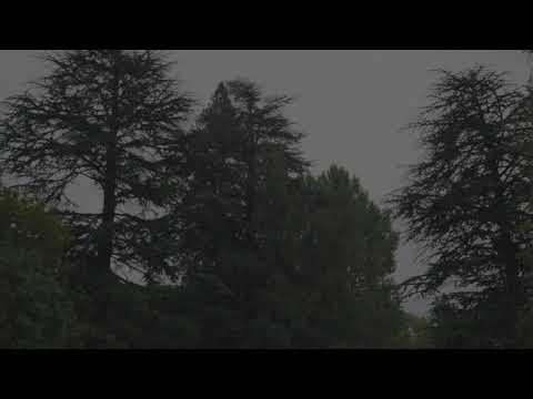 Sleepy RAIN for 10 hours | RAIN Sounds for Sleeping, Insomnia Natural Sleep Aid, Relaxing, Studying