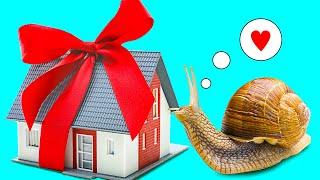 A DIY House For A Giant Snail || Make Your Pet Snail Happy