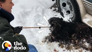Severely Matted Dog Gets Rescued from a Blizzard  | The Dodo