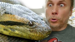 MY ANACONDA IS GETTING HUGE!! BIRDS OF PREY VISIT THE REPTILE ZOO!! | BRIAN BARCZYK