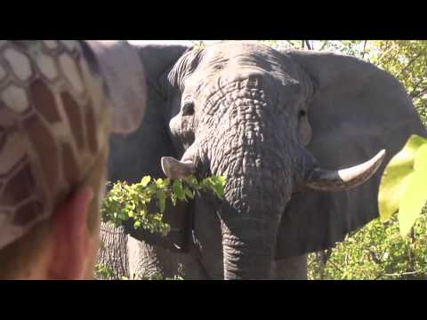 Dallas Safari Clubs Tracks Across Africa - Botswana  The Ultimate Gift