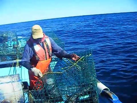 gatuky y chapis pescando langosta