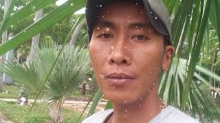 Nhac che kiep an choi ut ha condao@gmail.com