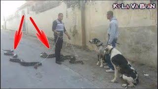 10 con thú cưng kỳ lạ và điên rồ nhất thế giới