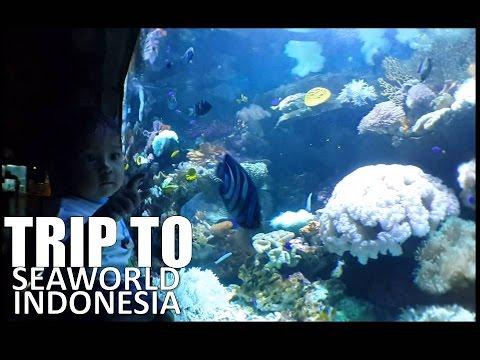 Trip To Seaworld Indonesia