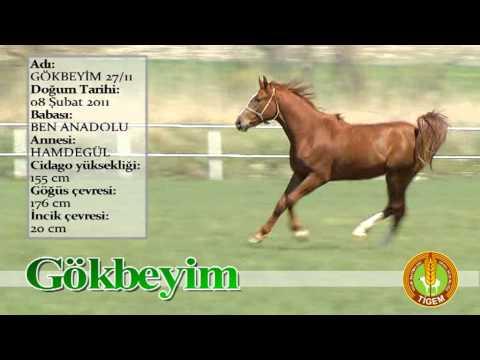 GOKBEYIM