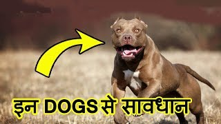 Top 10 MOST Dangerous Dog Breeds in the World (2018)   इन कुत्तों से सावधान