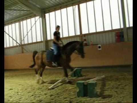 Mein Pferd ~ Rico ´s Geschichte ~