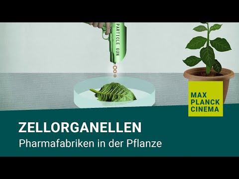 Zellorganellen - Pharmafabriken In Der Pflanze
