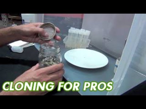 Cloning Kits - MicroClone TC Starter Kit - Super Starts Kit Tissue Culture & Cloning Plants Success