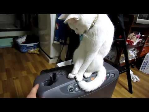 猫VSおれ   Cats VS me