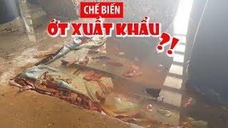 Kinh hoàng chế biến ớt xuất khẩu trong hồ đầy côn trùng chết và phân súc vật