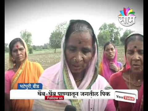 Absence of monsoon showers in Beed creates problems for farmers