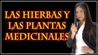 Las Hierbas Medicinales y Las Plantas Medicinales, ¿Para que sirven las hierbas medicInales?