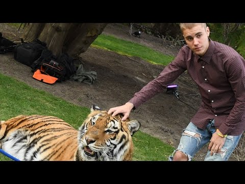 Justin Bieber Slammed by PETA for Posing With A Tiger At His Dad's Engagement Party